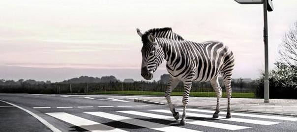 Trecerea de pietoni - zebra